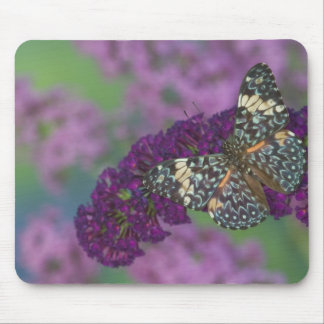 Sammamish Washington Photograph of Butterfly 35 Mouse Pad