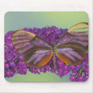 Sammamish Washington Photograph of Butterfly 37 Mouse Pad