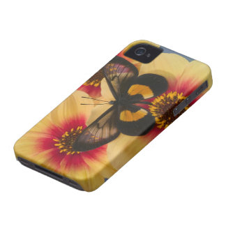 Sammamish Washington Photograph of Butterfly 39 Case-Mate iPhone 4 Cases