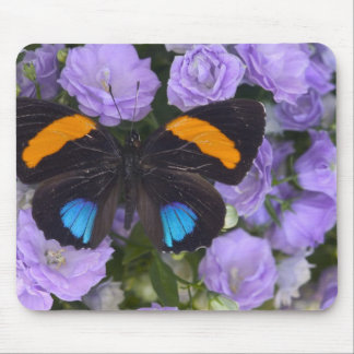 Sammamish Washington Photograph of Butterfly 3 Mouse Pad