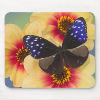 Sammamish Washington Photograph of Butterfly 40 Mouse Pad