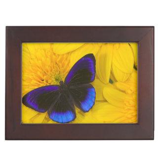 Sammamish Washington Photograph of Butterfly 41 Keepsake Box