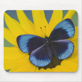 Sammamish Washington Photograph of Butterfly 44 Mouse Pad