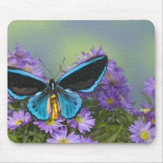 Sammamish Washington Photograph of Butterfly 52 Mouse Pad