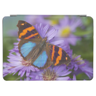 Sammamish Washington Photograph of Butterfly 54 iPad Air Cover