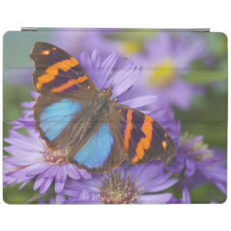 Sammamish Washington Photograph of Butterfly 54 iPad Cover