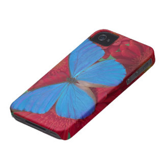 Sammamish Washington Photograph of Butterfly 56 iPhone 4 Cases