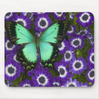Sammamish Washington Photograph of Butterfly 7 Mouse Pad