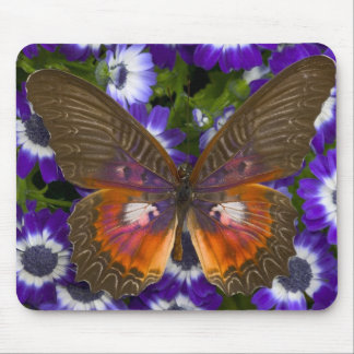 Sammamish Washington Photograph of Butterfly 8 Mouse Pad