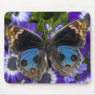 Sammamish Washington Photograph of Butterfly 9 Mouse Pad