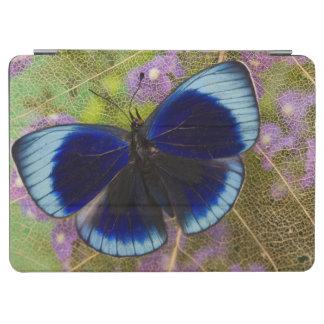 Sammamish Washington Photograph of Butterfly iPad Air Cover