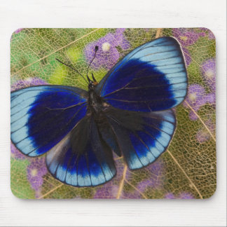 Sammamish Washington Photograph of Butterfly Mouse Pad