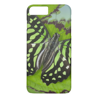 Sammamish Washington Photograph of Butterfly on 11 iPhone 8 Plus/7 Plus Case