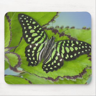 Sammamish Washington Photograph of Butterfly on 11 Mouse Pad