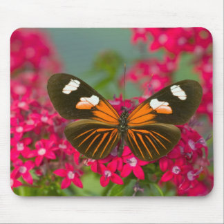 Sammamish Washington Photograph of Butterfly on 14 Mouse Pad