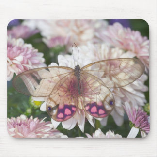 Sammamish Washington Photograph of Butterfly on 15 Mouse Pad