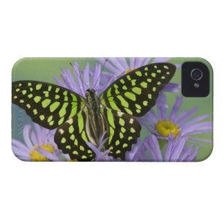 Sammamish Washington Photograph of Butterfly on 16 iPhone 4 Case