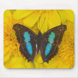 Sammamish Washington Photograph of Butterfly on 7 Mouse Pad