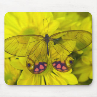 Sammamish Washington Photograph of Butterfly on 8 Mouse Pad