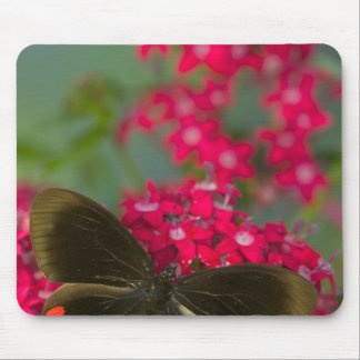 Sammamish Washington Photograph of Butterfly on Mouse Pad