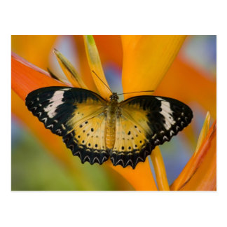 Sammamish, Washington. Tropical Butterflies 18 Postcard