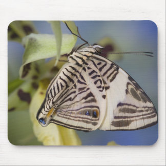 Sammamish, Washington. Tropical Butterflies 21 Mouse Pad