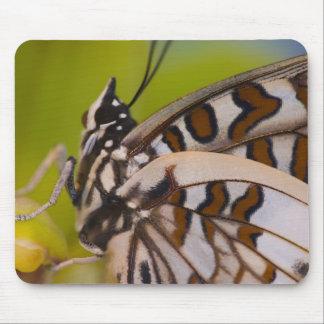 Sammamish, Washington. Tropical Butterflies 23 Mouse Pad