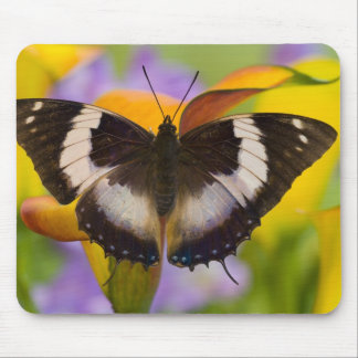 Sammamish, Washington. Tropical Butterflies 27 Mouse Pad
