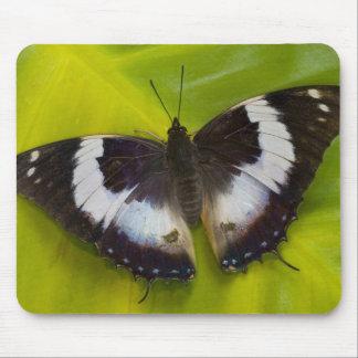 Sammamish, Washington. Tropical Butterflies 29 Mouse Pad