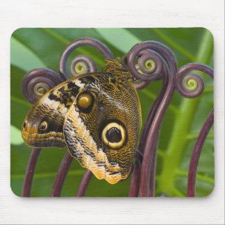 Sammamish, Washington. Tropical Butterflies 31 Mouse Pad
