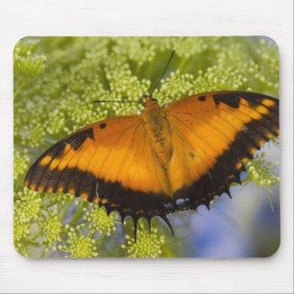 Sammamish, Washington. Tropical Butterflies 37 Mouse Pad