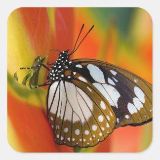 Sammamish, Washington. Tropical Butterflies 42 Square Sticker