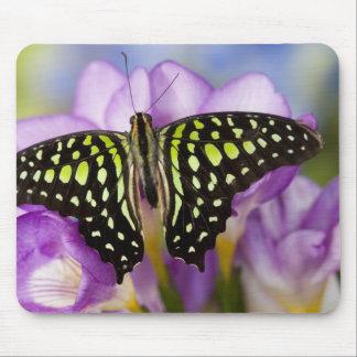 Sammamish, Washington. Tropical Butterflies 44 Mouse Pad