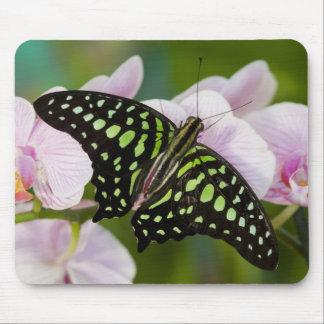 Sammamish, Washington. Tropical Butterflies 46 Mouse Pad