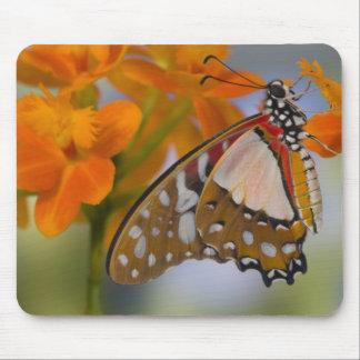 Sammamish, Washington. Tropical Butterflies 47 Mouse Pad