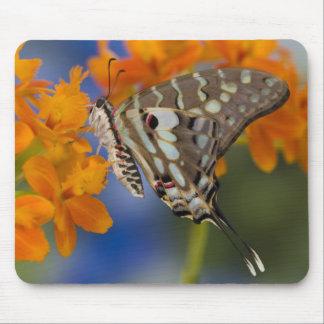 Sammamish, Washington. Tropical Butterflies 49 Mouse Pad