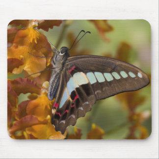Sammamish, Washington. Tropical Butterflies 51 Mouse Pad