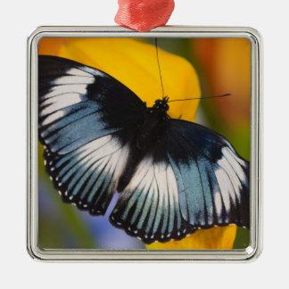 Sammamish, Washington. Tropical Butterflies 61 Christmas Ornament
