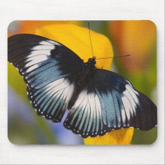 Sammamish, Washington. Tropical Butterflies 61 Mouse Pad