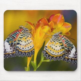 Sammamish, Washington. Tropical Butterflies 68 Mouse Pad