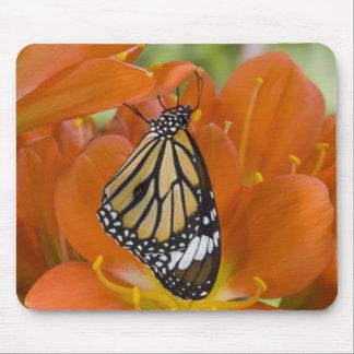 Sammamish, Washington. Tropical Butterflies 69 Mouse Pad