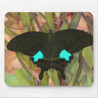 Sammamish, Washington Tropical Butterfly 18 Mouse Pad