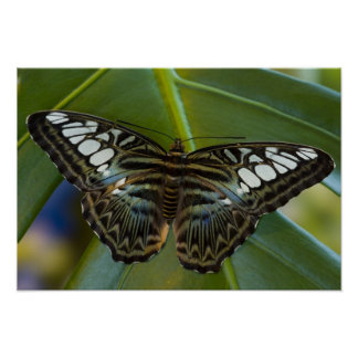 Sammamish, Washington Tropical Butterfly 22 Poster
