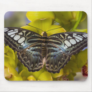 Sammamish, Washington Tropical Butterfly 23 Mouse Pad