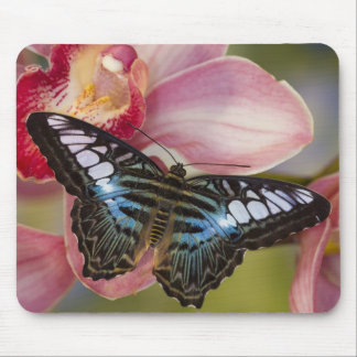 Sammamish, Washington Tropical Butterfly 2 Mouse Pad