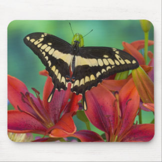Sammamish, Washington Tropical Butterfly 37 Mouse Pad