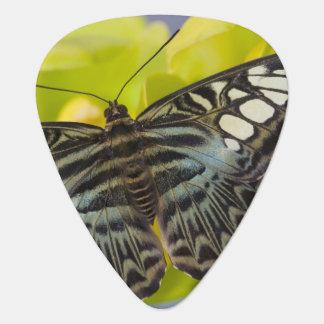 Sammamish, Washington Tropical Butterfly 38 Guitar Pick