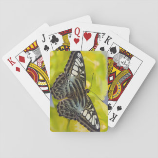 Sammamish, Washington Tropical Butterfly 38 Playing Cards