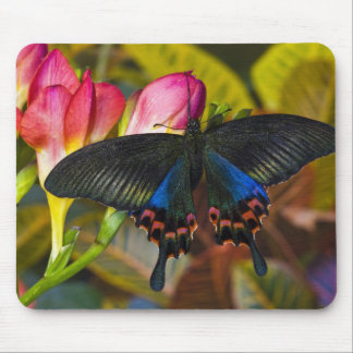 Sammamish, Washington Tropical Butterfly 40 Mouse Pad