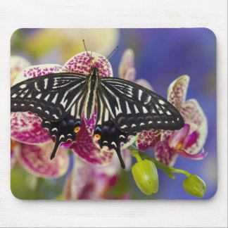 Sammamish, Washington Tropical Butterfly 43 Mouse Pad